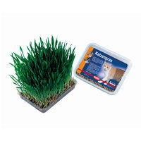 Nobby Cat Grass