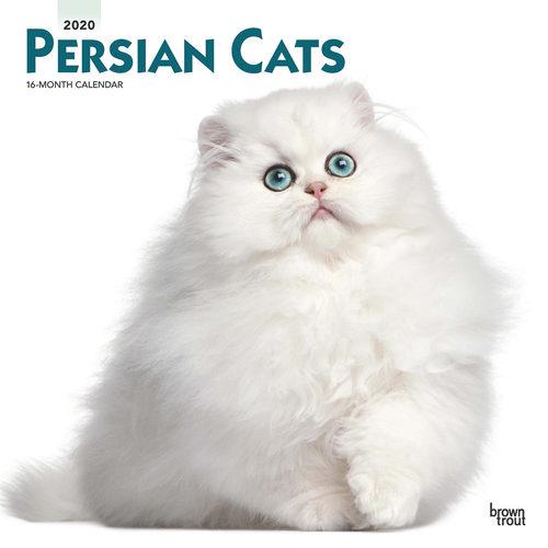 Persian Cats Calendrier 2020 Persan
