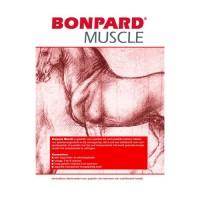Bonpard Muscle pour Chevaux