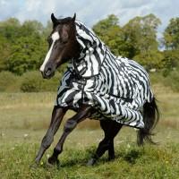 Bucas Ekzemerdecke Sweet-Itch Zebra