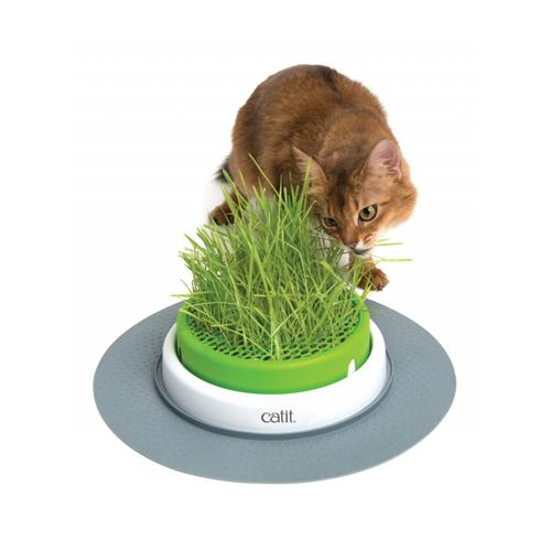 catit senses grass garden kat bestellen. Black Bedroom Furniture Sets. Home Design Ideas