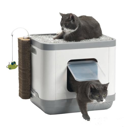 Moderna Cat Concept