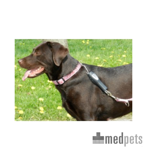 PatentoPet Dog e-walk Basic