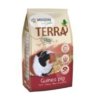 Vadigran Terra Guinea Pig