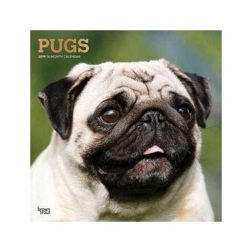 Pugs Kalender 2019