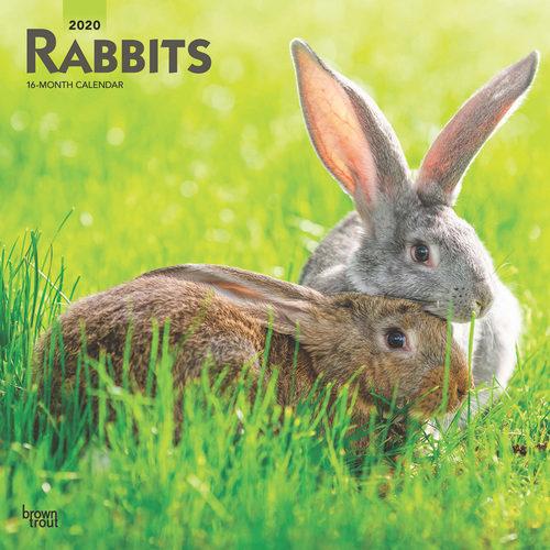Rabbits Calendrier 2020 (Lapin)