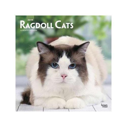 Ragdoll Cats Kalender 2019