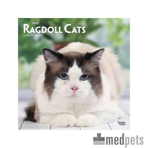 Product afbeelding van Ragdoll Cats Kalender 2019