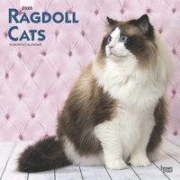 Ragdoll Cats Kalender 2020