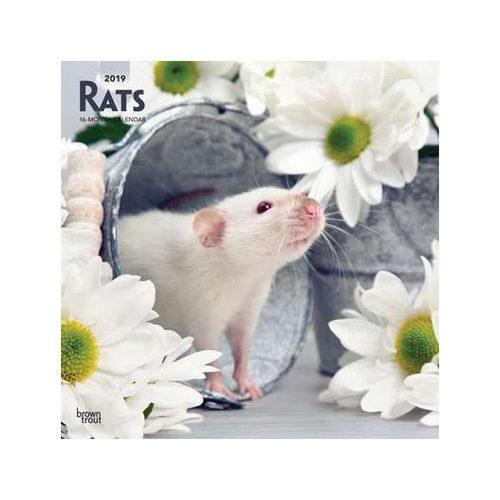 Rats Calendrier 2019