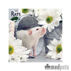 Product afbeelding van Rats Kalender 2019