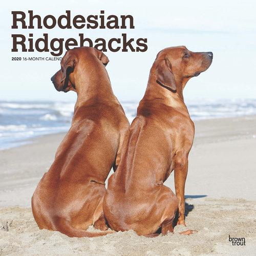 Rhodesian Ridgebacks Calendrier 2020 (Chien de Rhodésie)