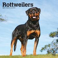 Rottweilers Kalender 2020
