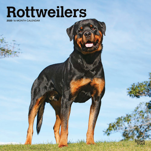 Rottweilers Calendrier 2020