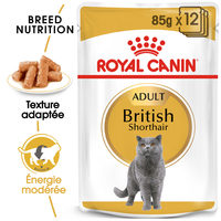 Royal Canin British Shorthair Adult Wet - Alimentation pour Chats