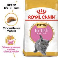 Royal Canin Kitten British Shorthair - Alimentation pour Chatons