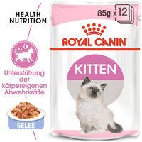 Royal Canin Kitten in Jelly - Katzenfutter