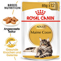Royal Canin Maine Coon Adult Wet - Katzenfutter