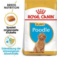Royal Canin Poodle Puppy - Hundefutter
