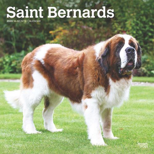 Saint Bernard Calendrier 2020