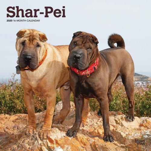 Shar-Pei Calendrier 2020