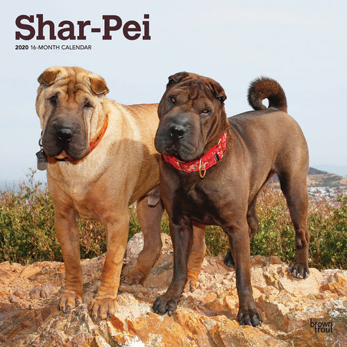 Shar-Pei Kalender 2020