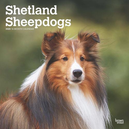 Shetland Sheepdogs Kalender 2020