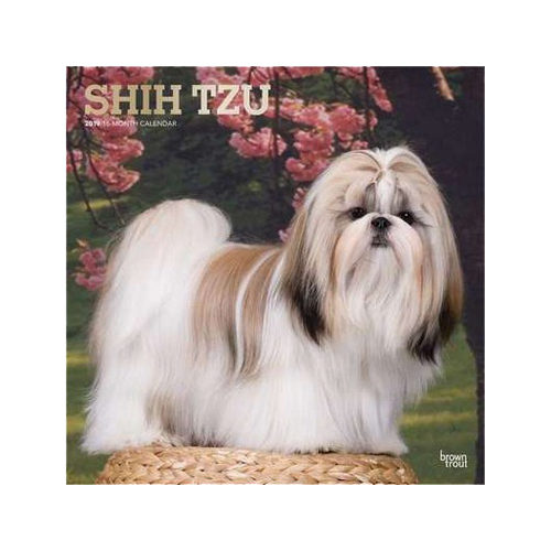 Shih Tzu Kalender 2019