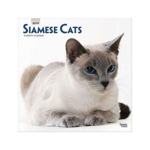 Siamese Cats Kalender 2019