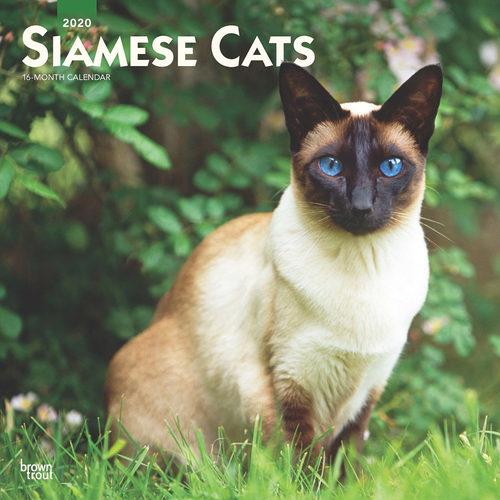 Siamese Cats Kalender 2020
