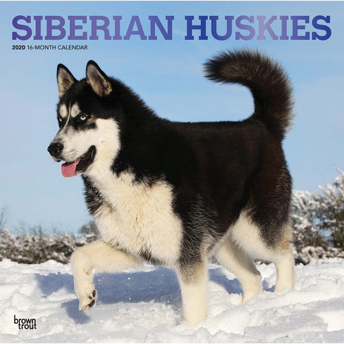 Siberian Huskies Calendrier 2020 (Husky de Sibérie)