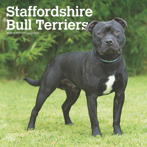 Staffordshire Bull Terriers Calendrier 2020