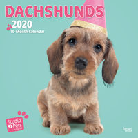 Studio Pets Adorable Dachshund Kalender 2020