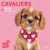 Studio Pets Cavalier Kalender 2020