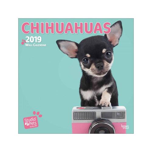 Studio Pets Chihuahua Kalender 2019