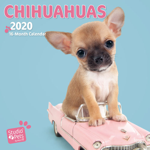 Studio Pets Chihuahua Kalender 2020