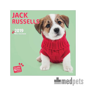 Product afbeelding van Studio Pets Jack Russell Kalender 2019