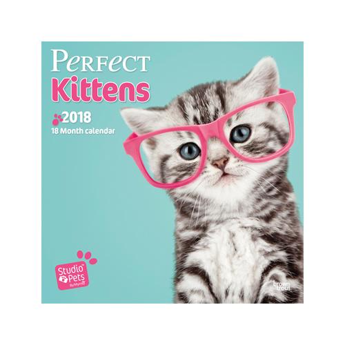 Studio Pets Kittens Kalender 2018