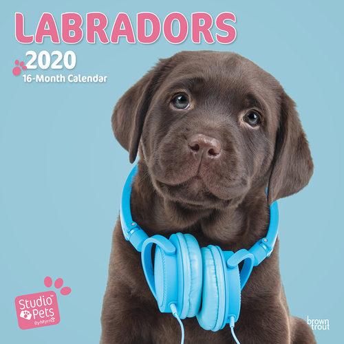 Studio Pets Lovable Labrador Kalender 2020