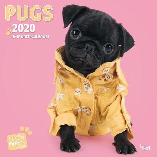 Studio Pets Pug Kalender 2020