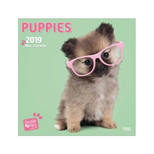 Studio Pets Puppy Love Kalender 2019