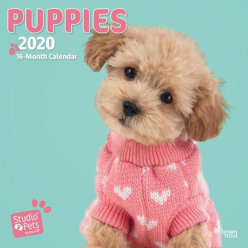 Studio Pets Puppy Love Kalender 2020