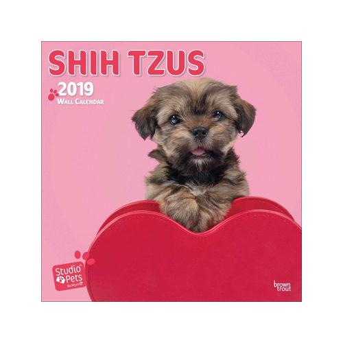 Studio Pets Shih Tzu Kalender 2019