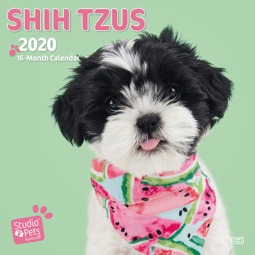 Studio Pets Shih Tzu Calendrier 2020