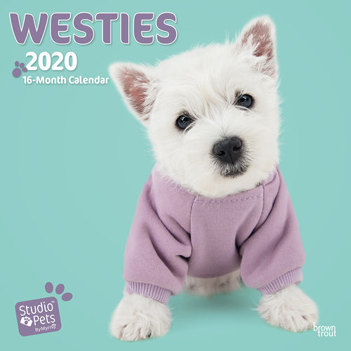Studio Pets Westie Kalender 2020