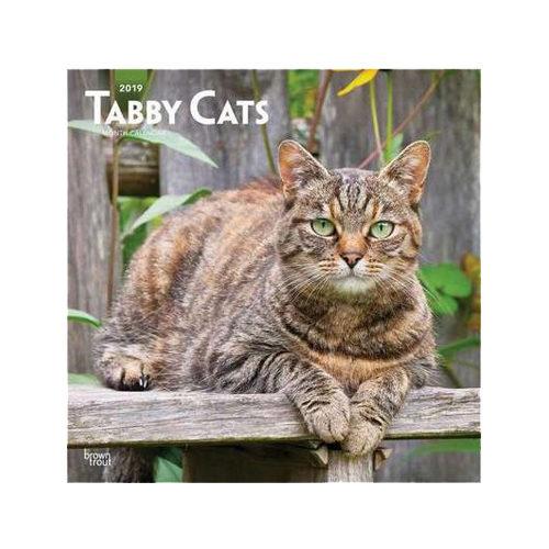 Tabby Cats Kalender 2019