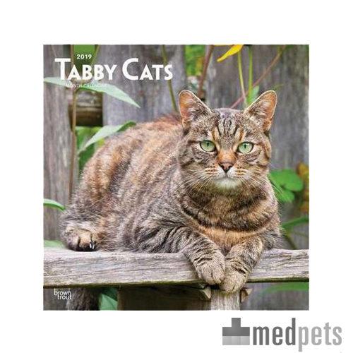 Product afbeelding van Tabby Cats Kalender 2019
