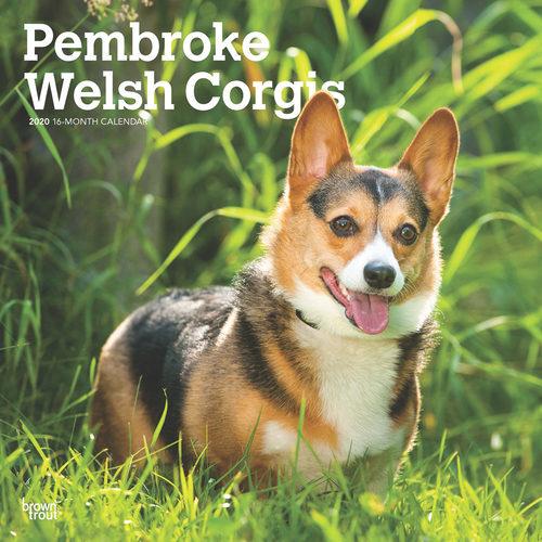 Welsh Corgi Calendrier 2020