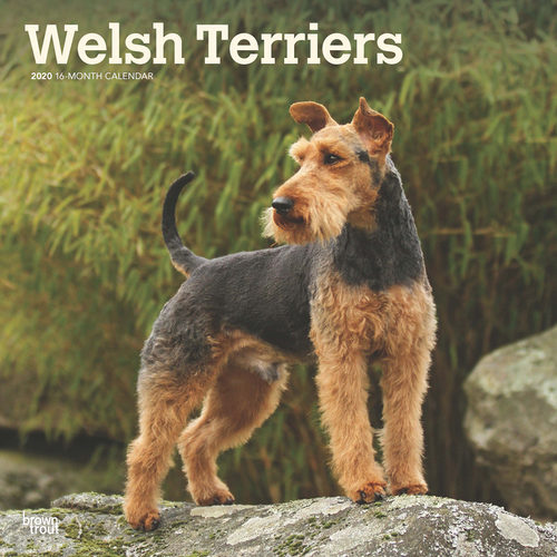 Welsh Terriers Calendrier 2020