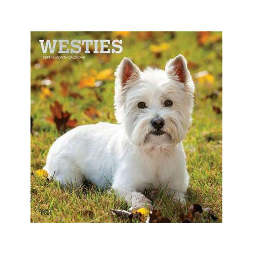 West Highland White Terriers Kalender 2019